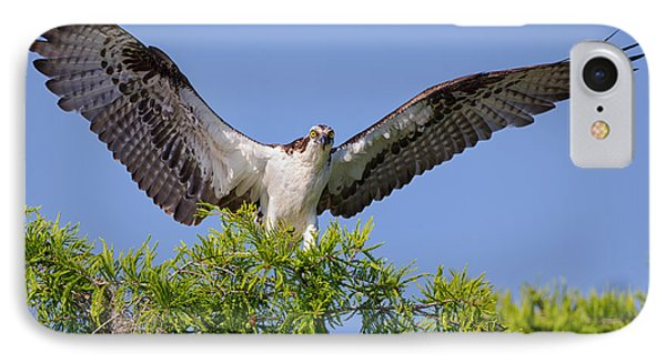 Osprey With Wide-open Wings IPhone Case by Andres Leon