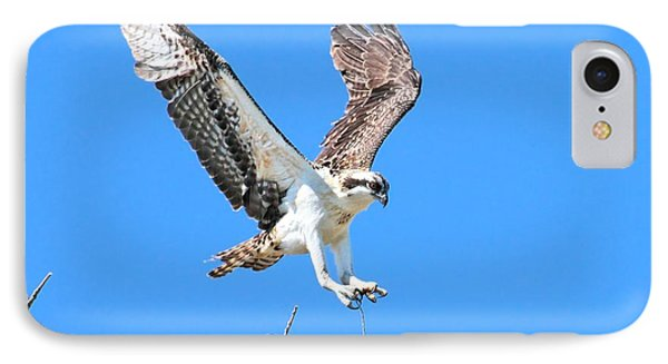Ospreys Learning To Fly IPhone Case by Debbie Stahre
