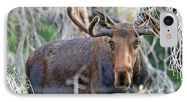 IPhone Case featuring the photograph Overlooking Moose by Scott Mahon