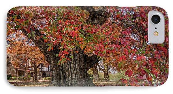 Owensboro Sassafras  Tree IPhone Case