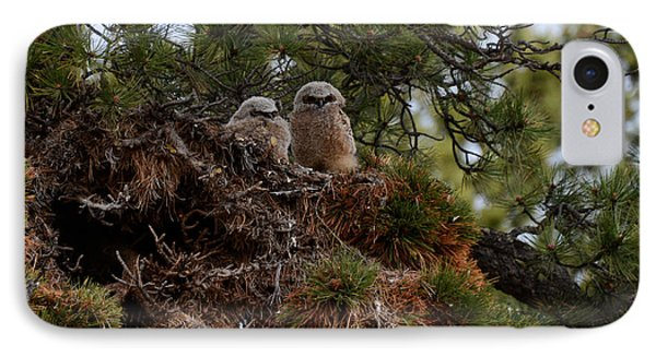 Owl Babies Rocky Mountain National Park  IPhone Case