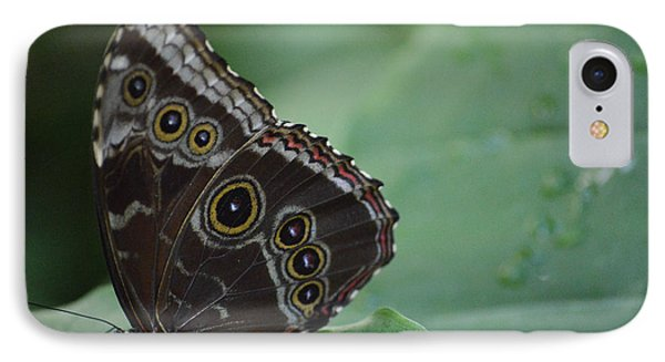 Owl Butterfly IPhone Case by Linda Geiger