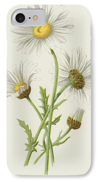 Ox Eye Daisy IPhone Case by Frederick Edward Hulme