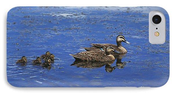 Pacific Black Duck Anas Superciliosa IPhone Case by Gerard Lacz