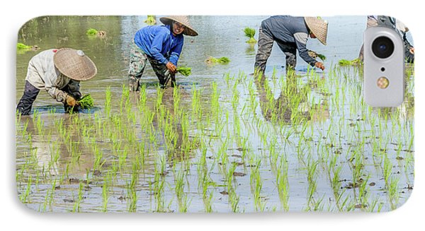 Paddy Field 1 IPhone 7 Case by Werner Padarin