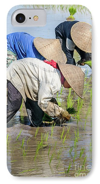 Paddy Field 2 IPhone 7 Case by Werner Padarin