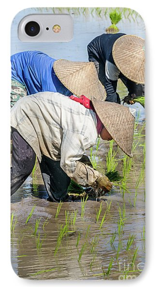Paddy Field 2 IPhone Case by Werner Padarin