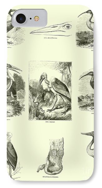 Page From The Pictorial Museum Of Animated Nature  IPhone 7 Case