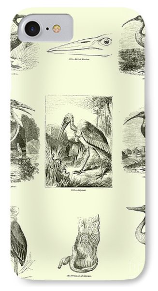 Page From The Pictorial Museum Of Animated Nature  IPhone Case by English School