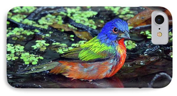 Painted Bunting After Bath IPhone Case by Larry Nieland