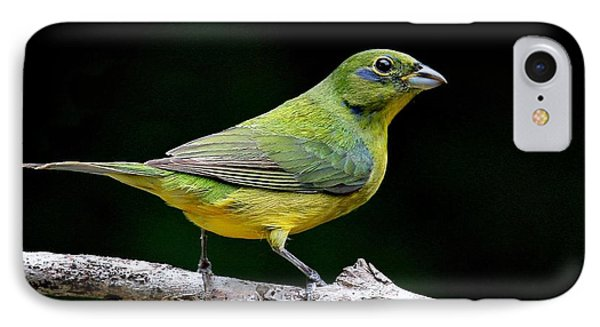 Painted Bunting - Second Year Male IPhone Case