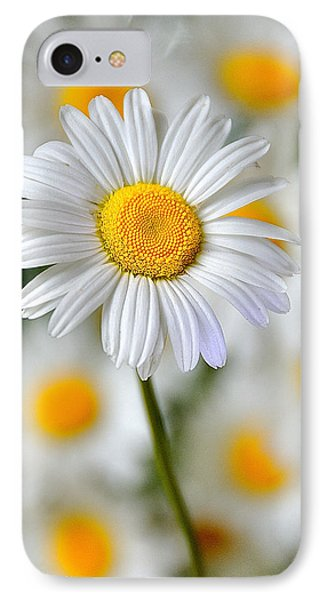 Painted Daisies IPhone Case