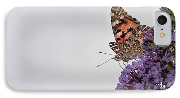 Painted Lady (vanessa Cardui) Phone Case by John Edwards