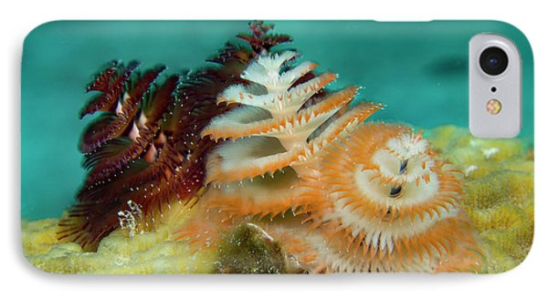 IPhone Case featuring the photograph Pair Of Christmas Tree Worms by Jean Noren