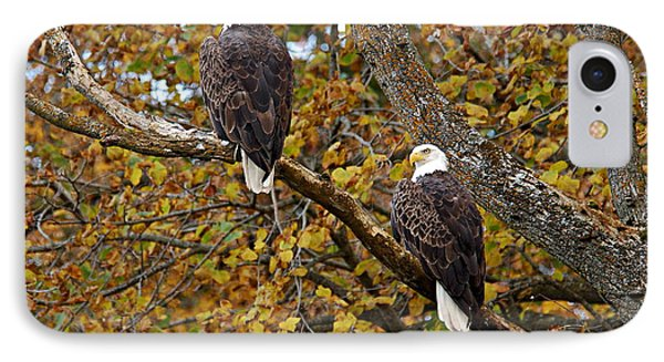 Pair Of Eagles In Autumn IPhone Case by Larry Ricker