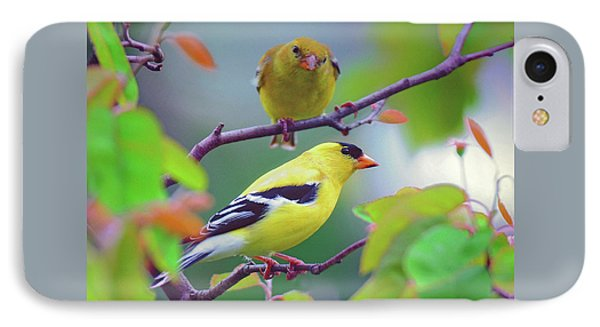 Pair Of Goldfinches IPhone Case