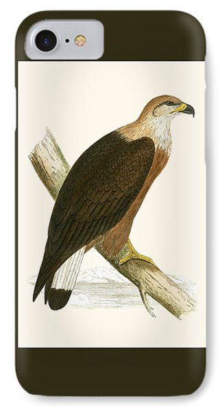 Pallas's Sea Eagle IPhone Case