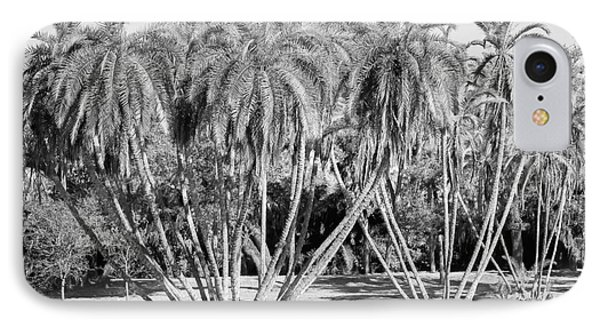 Palm Clusters, Lighter Black And White IPhone Case by Liesl Walsh