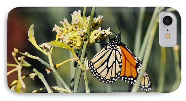 IPhone Case featuring the photograph Palm Springs Monarch by Kyle Hanson