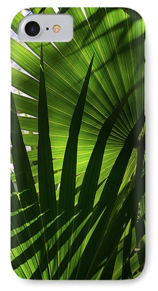 Palm Study 1 IPhone Case by Dana Sohr