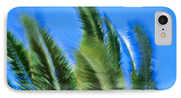 Palm Tree Top In The Wind IPhone Case by Panoramic Images