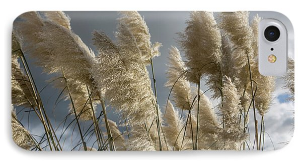 Pampas Grass IPhone Case