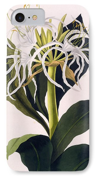 Pancratium Speciosum IPhone Case by Mrs Edward Bury
