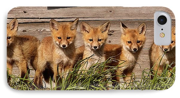 Panoramic Fox Kits IPhone Case by Mark Duffy