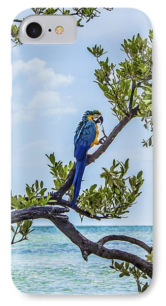 IPhone Case featuring the photograph Parrot Above The Aqua Sea by Paula Porterfield-Izzo
