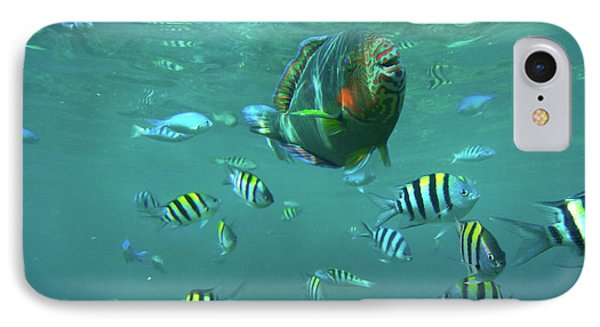 Parrot Fish IPhone Case by Tim Fitzharris