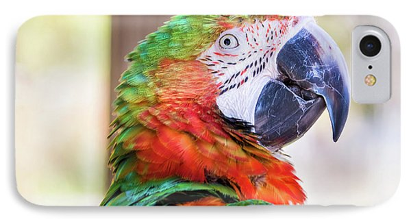 Parrot IPhone Case by Stephanie Hayes