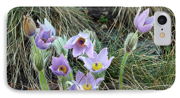 IPhone Case featuring the photograph Pasqueflower by Michal Boubin