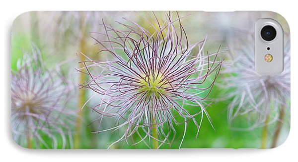 Pasqueflower Seed Heads IPhone Case by Tim Gainey