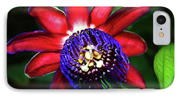 IPhone Case featuring the photograph Passion Flower by Anthony Jones