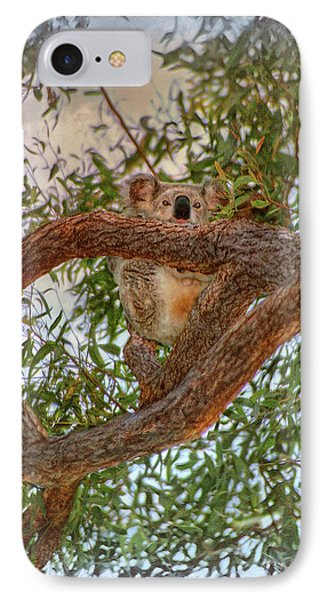 IPhone Case featuring the photograph Patience Brings Koalas by Hanny Heim