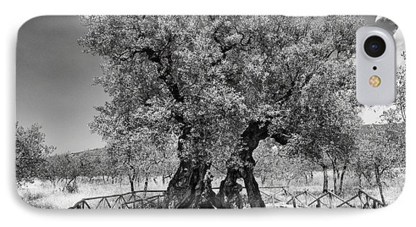 Patriarch Olive Tree IPhone Case by Alan Toepfer