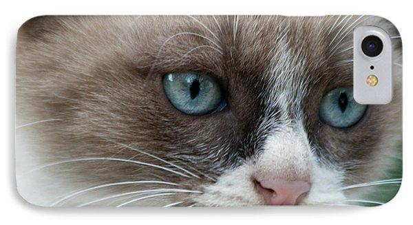 Pauls Little Cat IPhone Case by Heiko Koehrer-Wagner