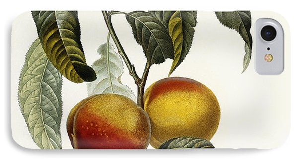 Peach IPhone Case by Pierre Antoine Poiteau