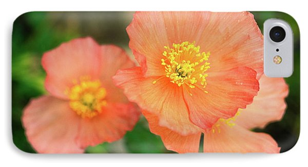 Peach Poppies IPhone Case by Sally Weigand