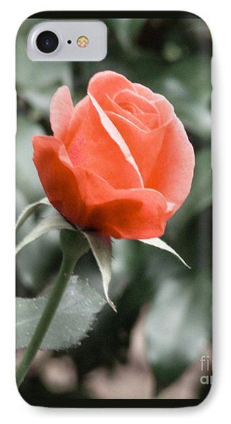 Peachy Rose IPhone Case