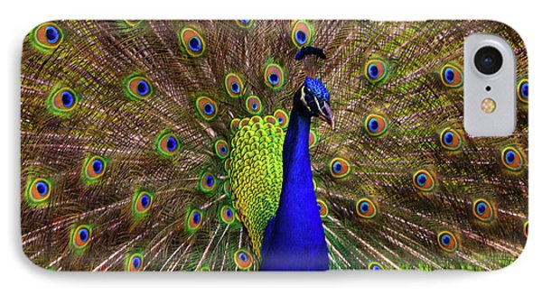 Peacock Showing Breeding Plumage In Jupiter, Florida IPhone Case by Justin Kelefas