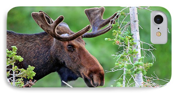 IPhone Case featuring the photograph Peaking Moose by Scott Mahon
