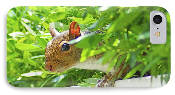 Peek-a-boo Gray Squirrel IPhone Case by Kathy Kelly