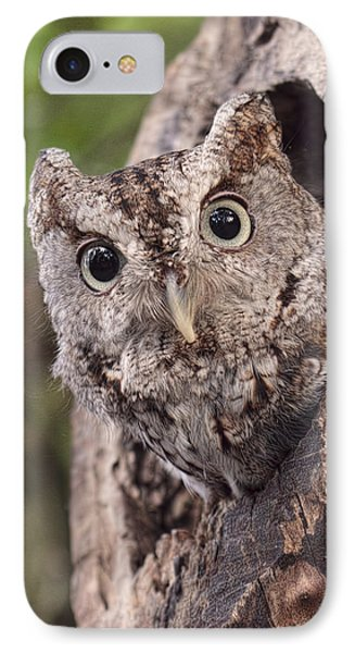 Peek A Boo IPhone Case by Cheri McEachin
