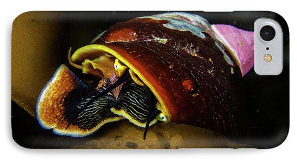 Peekaboo Snail IPhone Case by Jody Clark