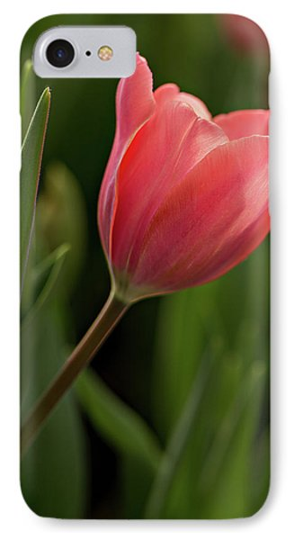 IPhone Case featuring the photograph Peeking Tulip by Mary Jo Allen