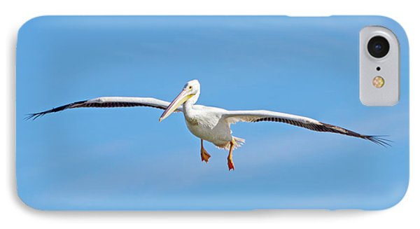 Pelican In Flight IPhone Case by Mark Andrew Thomas