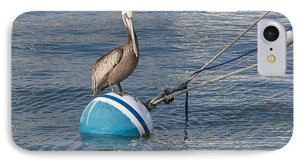 Pelican On A Buoy IPhone Case by Loriannah Hespe