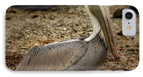 Pelican On The Rocks IPhone Case by Jean Noren
