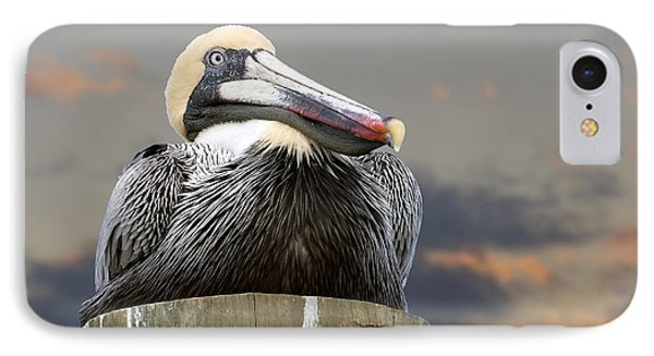 Pelican Perch IPhone Case by Betty Denise